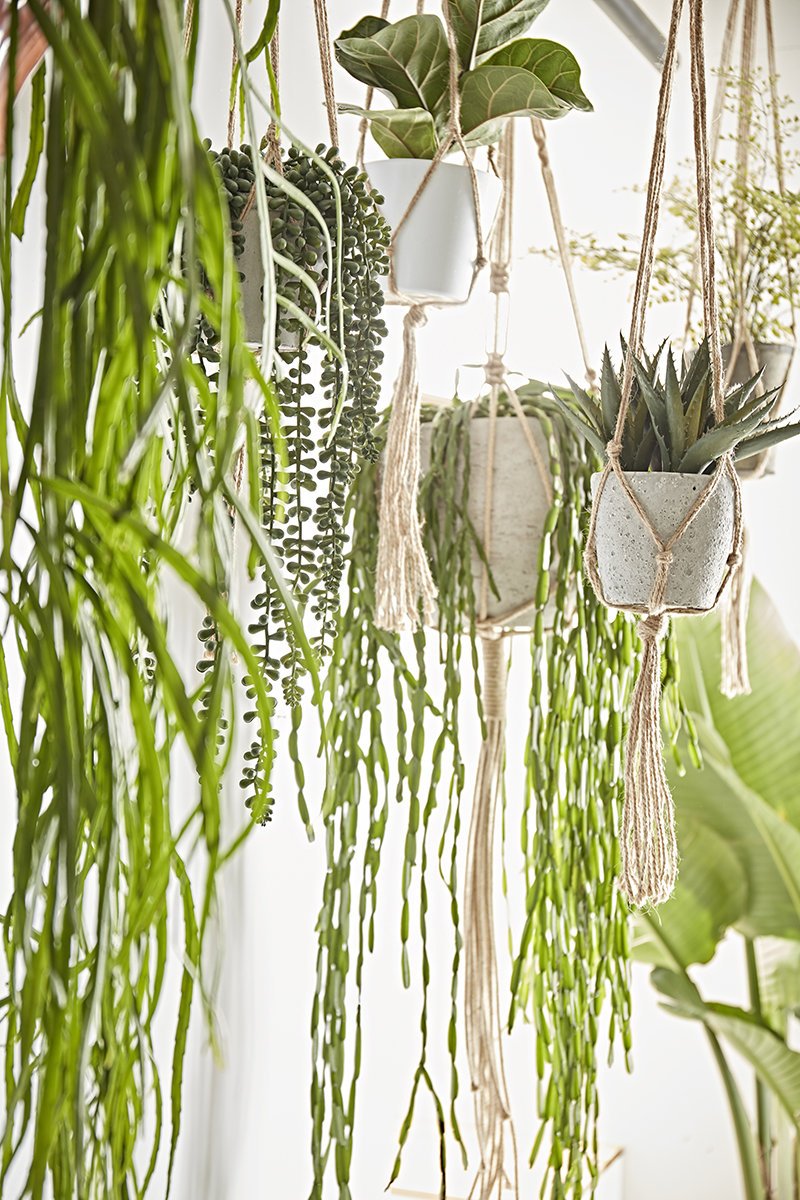 Our Guide to Choosing & Styling Bathroom Plants Image 4